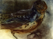 Bird Study, 2009; intaglio; Image: 19 1/2 x 25 1/2 inches