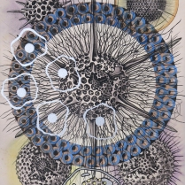Radiolaria #5, 2007; Inkjet, screenprint, painting; Image: 20 x 13 inches