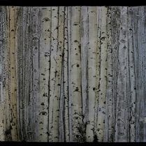 Forrest of Eyes, 2010; Laser engraved wood relief printed on handmade paper; Image: 18 x 48 inches