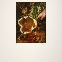 Margaret Craig; Bad Birds: Down, 1996; Photo etching; Image: 241 mm x 184 mm