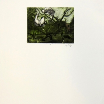 Margaret Craig; Bad Birds: Untitled, 1996; Photo etching; Image: 126 mm x 168 mm