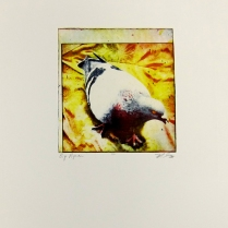Margaret Craig; Bad Birds: Big Pigeon, 1996; Photo etching; Image: 199 mm x 182 mm