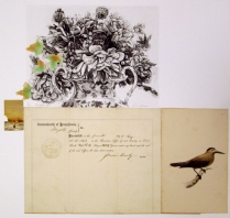 Pricked Off, 2010; Photogravure, collage; Image: 451 mm x 591 mm