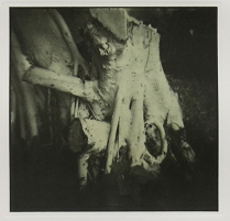 Untitled (Cancun stump), 2003; Collotype, chine colle; Object size: 507 x 380