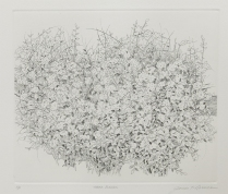 Three Bushes, 1981; Etching, engraving; Paper size: 338 x 425 mm