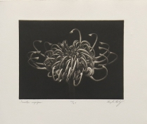 "Douglas Bosley; Grevilea, 2014; Mezzotint; Paper size: 358 x 285 mm; from, ""Trash: A Printmaking Portfolio Exchange"""