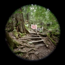 Global Rescue Station (Old Growth Forest Scheduled for Clear Cutting), The Styx Valley of the Giants, Tasmania, Australia , 2005-2007; Archival pigment print; Object size: 607 x 610 mm
