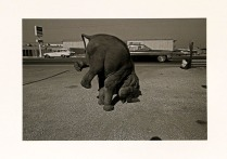 Elephant, Long Beach, California, 1972; Archival Inkjet; Object size: 329 x 480 mm