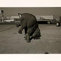 Elephant, Long Beach, California, 1972; Archival Inkjet; Object size: 329 x 480 mm