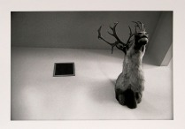 Hunting Trophy, New York, 1984; Archival Inkjet; Object size: 279 x 431 mm
