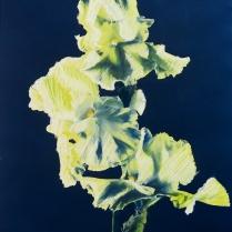 Branch of 3 Iris, 1984; Cyanotype, watercolor, pastel; Object size: 508 x 402 mm
