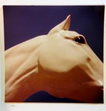 Albuquerque NM (horse), 1976; Ektacolor print; Object size: 547 x 540 mm