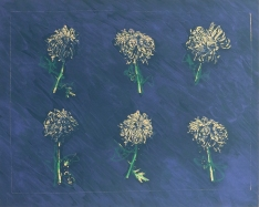 Betty Hahn; Cut Flowers: 6, 1979; lithograph (410x505mm)