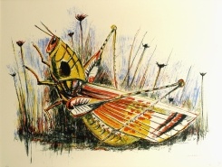 Otis Dozier; Grasshopper, 1987; lithograph (460x565mm)