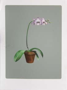 Richard Falle; Exercise 10: Phalaenopsis Memento Mori, 2012; inkjet proof