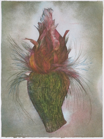 Penny Cerling; Cactus Flower, 1981; etching and aquatint; 765x566 mm