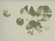 Neal Cox; Dome 5.2, 2011; Collotype; 286mmx357mm; Edition 6/6 E.V.