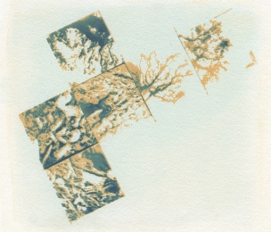 Neal Cox; Fort Worth Tree, 2015; Gum bichromate over cyanotype; 213mmx185mm; Edition 3/3 E.V.