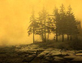 Joyce Tenneson; Trees & Rocks, 2016; inkjet pigment print