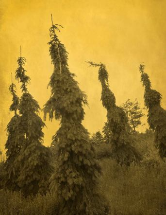 Joyce Tenneson; Mythological Trees, 2016; inkjet pigment print