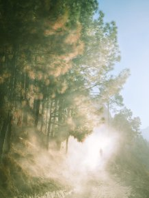 Trees, earth, human and space, 2013 (inkjet pigment print)