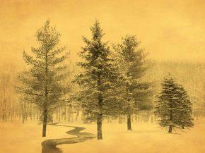 Joyce Tenneson; Trees in Snow, 2015; inkjet pigment print